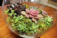 1000 Images About Fish Bowl Ideas On Pinterest Succulent Terrarium Succulents Garden And Bowls