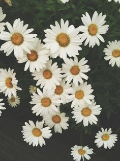 • love photography pretty beauty art funny girl fashion white summer sky vintage photograph boho indie green flower flowers nature yellow girly floral Daisy <3 background pale soft grunge realizes •