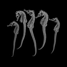 howling-cat-tongues:  exercicedestyle:  electricorchid:  ghostly seahorse radiograph   +