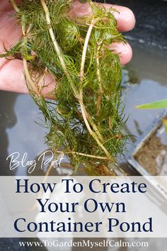 Water Plants For Ponds, Small Water Gardens, Pond Plants, Water Pond, Container Pond, Container Water Gardens, Container Gardening, Small Garden Wildlife Pond, Garden Projects
