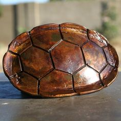 its a belt buckle! Patina Finish, Belt Buckles, Rust, Turtle, Shells, Buy And Sell, Bunny Rabbit, Metal, Earthy