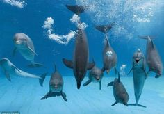 anywhere that I can go and swim with dolphins = awesome #JetsetterCurator