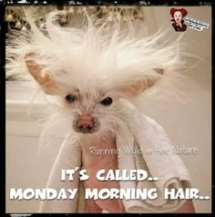 Monday morning hair