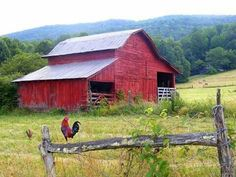 Red barn and rooster