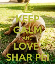 KEEP CALM AND LOVE SHAR PEI #sharpei #dog #dogs #doggie #cute #adorable #sweet #keepcalm