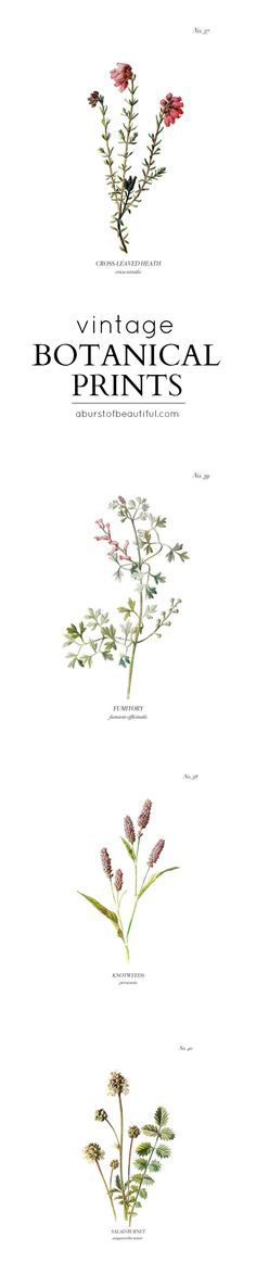 A set of four vintage wild flower botanical prints are an easy way to add charm and character to any home. Download them for free at http://www.aburstofbeautiful.com