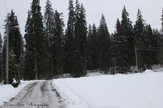 Road to nowhere #forest #winter #Borsec #Romania