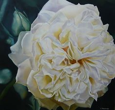Serenity Rose - oil on canvas - Lee Dewsnap Colorful Flowers, Beautiful Flowers, Flower Art, Art Flowers, Garden Painting, Rose Oil, White Roses, Artist At Work, Painting Inspiration