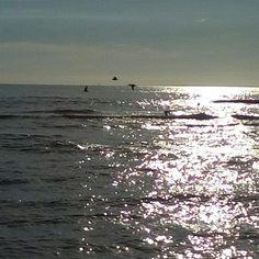 Sunny evening birds