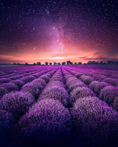 Amazingly Beautiful - Nature and travel photography — Lavender Fields under the stars, in Valensole. Field Wallpaper, Purple Wallpaper, Nature Wallpaper, Landscape Photography, Nature Photography, Travel Photography, Photography Flowers, Beautiful Flowers, Beautiful Places