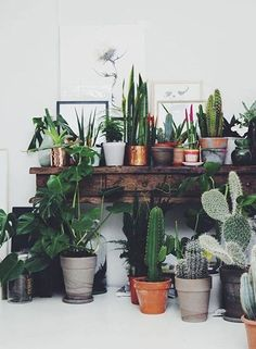 The French Bedroom Company | Urband Jungle Bedroom. We're loving the interiors trend of house plants - from concrete planters, cacti, basket pots, hanging plants, palms and so much green for your home. Collection of house plants on a wooden table with white floor and walls