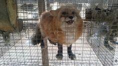 Urge Retailer Patricia Nash to End Fur Sales | PETALatino.com - 1