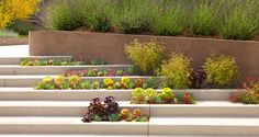 Gorgeous!  http://www.socal-asla.org/images/stories/slideshowmain/13-CCD-08.jpg