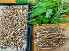 Dandelion Leaves, Dandelions, Korn, Coffee Recipes, Food Photo, Vegetable Recipes, How To Dry Basil, Roots, Nutrition