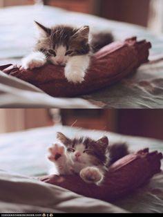 Pillow swimming kitteh
