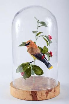"""Cedar Waxwing Bombycilla cedrorum 2010 by VeganTaxidermy. This is an entirely unique life-sized paper sculpture of a Cedar Waxwing, mounted on a branch with paper leaves and berries, inside a protective glass dome. Approximately 12"""" wide x 20"""" tall x 12""""deep"""