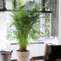 Plantes d'intérieur : voyez XXL (Dossiers)