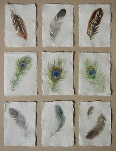 Feathers original watercolour illustration studies by Lisa Le Quelenec at seaside studios. Watercolor Feather, Feather Art, Watercolour Painting, Painting & Drawing, Watercolour Illustration, Feather Painting, Painting Inspiration, Tattoo Inspiration, Natural Forms