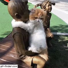 ^ This looks so sweet, but I really wish I could read the cats mind or at least sense his mood or demeanor. I kept waiting for the statue to suddenly come to life. Silly, I know, but could you imagine what the cats reaction might be? Funny Animal Videos, Cute Funny Animals, Funny Animal Pictures, Cute Baby Animals, Animals And Pets, Funny Cats, Baby Pictures, Funny Hug, Wtf Funny