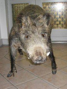 . Bad Taxidermy, Animals, Animales, Animaux, Animal, Animais