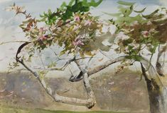 Andrew Wyeth  Crabapple 2007 Watercolor on paper