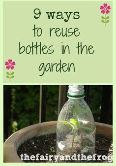 The fairy and the frog: 9 ways to reuse bottles and containers in the garden