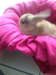 . Bunny, Animals, Cute Bunny, Animales, Animaux, Animal, Rabbit, Animais, Rabbits