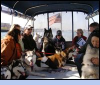 BOSTON DOGGIE CRUISES!!!!! I DIDNT KNOW THIS EXISTED!!!!