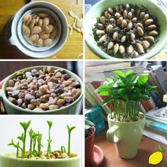 Germinated lemon seeds in a cup!  Nice idea for the desk. And scented!