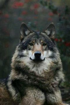 STOP KILLING WOLVES