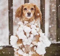 Hond - Hart voor Dieren