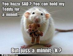 Funny Animal Captions - Yoo  hazza  SAD ?  Yoo  can  hold  my  Teddy  for  a  minnit .