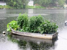 "Congratulations Valerie! – The 8th WEEKLY WINNER of our 2017 PHOTO CONTEST! We have seen quite a few poolside gardens, a couple of gardens on customer's docks, but this is a first.  ""Ran out of sunny spots at my house across the river so I'm growing my veggies in my spare boat on the sunny side of the river."" -Valerie M., Oxford, CT  We will be selecting a weekly winning photo all summer long.  Send your GrowBox™ pictures to photos@agardenpatch.com for a chance to win some great prizes!"