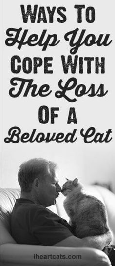 Ways To Help You Cope With The Loss Of A Beloved Cat