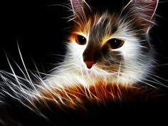 A re-edited photo featuring a Fluffy Stray Cat, incorporating a combined HDR and Fractalius effect. Created in Photoshop using various filters and photo stock. Redux version: nerdboy69.deviantart.c...