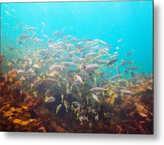 School of fish Metal Print by Miroslava Jurcik. All metal prints are professionally printed, packaged, and shipped within 3 - 4 business days and delivered ready-to-hang on your wall. Any Images, Got Print, High Gloss, Fine Art America, Art Photography, Free Market, Fish, Metal, School