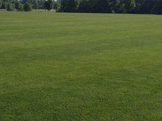 Картинки по запросу grass field