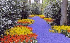 Keukenhof: il giardino più grande del mondo.