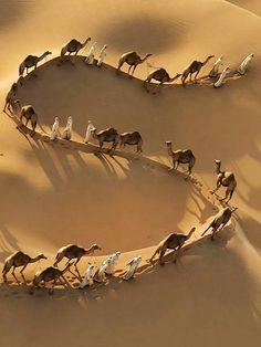 Camel trek in desert. Desert Dream, Desert Life, Drone Photography, Landscape Photography, Desert Sahara, Deserts Of The World, Garden Types, Rocky Mountains, Belle Photo