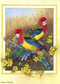 beautiful bird paintings | beautiful-bird-paintings-01.jpg