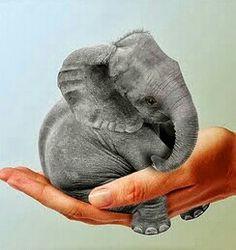 Save elephants...