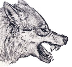 Resultado de imagen para drawings of wolves