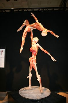 body worlds - a must see for science nerds.