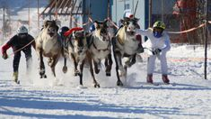 Every easter in Kautokeino, Norway there is a traditional reindear race between the lokal mountain sami people.