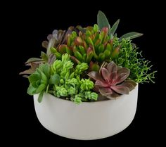Succulent Garden best office plants - SnapSuites boston back bay executive office space