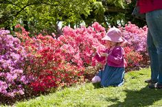 Sakura Matsuri 2012 by Brooklyn Botanic Garden, via Flickr