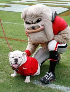 UGA Georgia Mascot http://www.payscale.com/research/US/School=University_of_Georgia_(UGA)/Salary/
