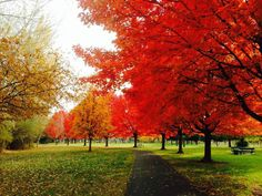 Franklin Park (Nob Hill area) In Yakima, WA