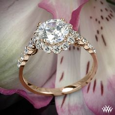 Rose Gold Verragio Round Halo Diamond Engagement Ring from the Verragio Insignia Collection.