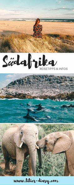 Eastern Cape South Africa vacation: We have collected the most beautiful travel tips for a trip to South Africa to the Eastern Cape. Surfing in Jeffreys Bay, hiking along the Wild Coast, elephants and Chobe National Park, Parc National, National Parks, Africa Destinations, Port Elizabeth South Africa, Koh Lanta Thailand, Costa, South Africa Safari, South Afrika